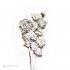 Серебряная чайная ложка Роза ветров